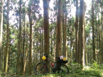『那些Bikepacking的日子』 - 羅山林道